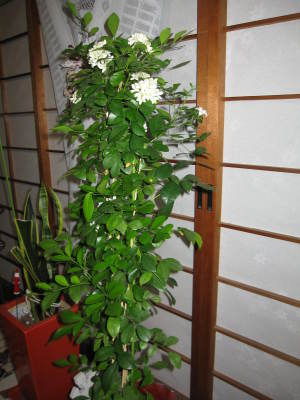 201008_2tyuu_jasumin_006