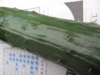 20110618_nouen_010_2