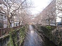20120301_meguro_river