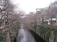 20120330_laica_sakura_001