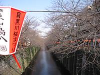 20120328_meguro_sakura_001