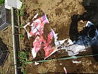 2012041929_suzuki_nouen_001_2