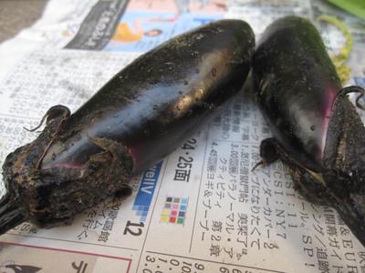20120601_suzukinouen_003