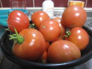 20120729_tomato_genkan_001