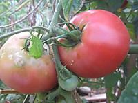 20120815_szk_farm_003