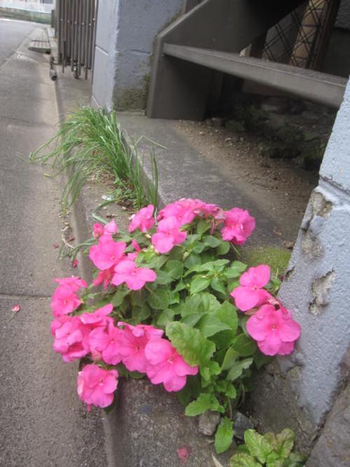 20121103_namagomi_002