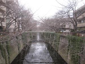 20130304_meguro_river_001
