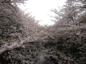20130329_megurigawa_001