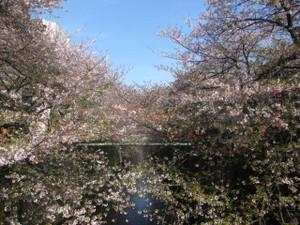 20130401_meguro_river_001