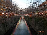 20140325_meguro_sakura_002