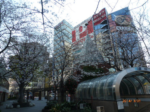 20140331_sukiyabashi_sakura2