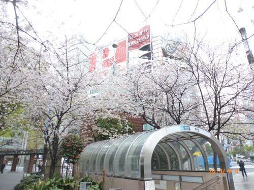 20140404_sukiyabashi_sakura_004