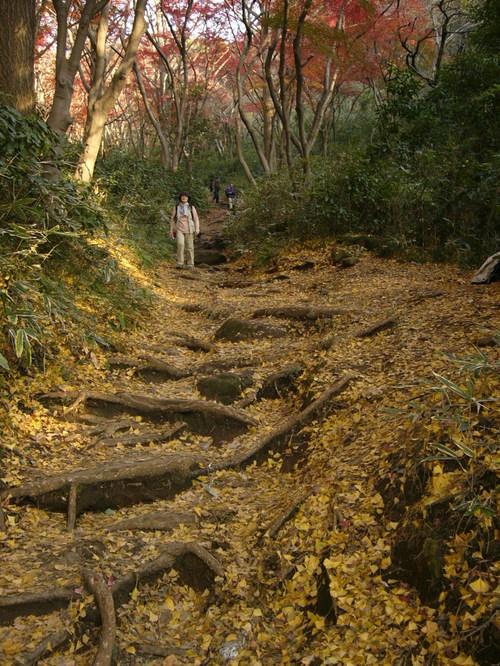 04年12月 鎌倉アルプスにて